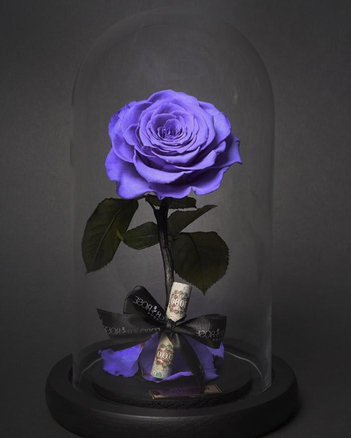 цветы в вакууме_фото 1