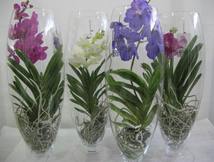 Орхидеи в стекле_фото 2