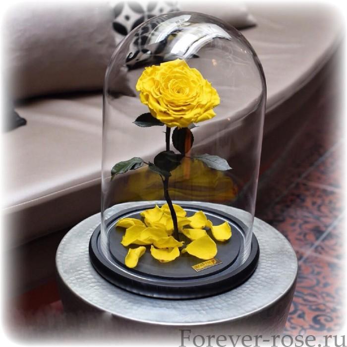 Роза в колбе купить дешево