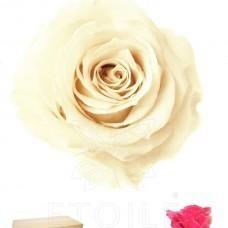 preserved-roses-little7