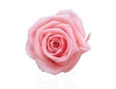 preserved-roses-little9