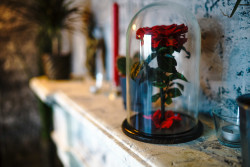 Роза под колпаком