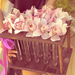 орхидеи в пробирках