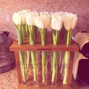 Тюльпаны в пробирке